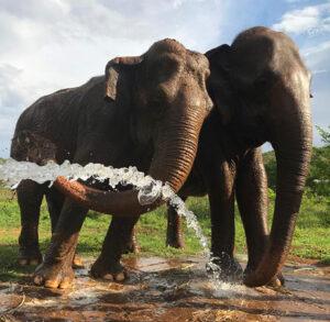 Foto Santuário de Elefantes Brasil